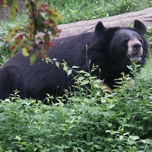 bearhun5n2.jpg